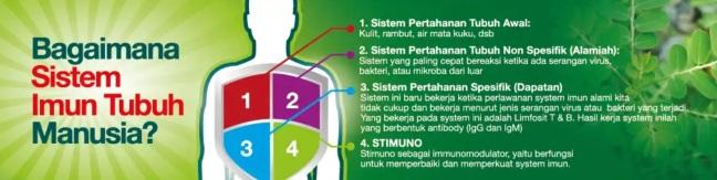 Sistem Imun Tubuh.jpg